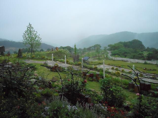 梅雨の植物園です。