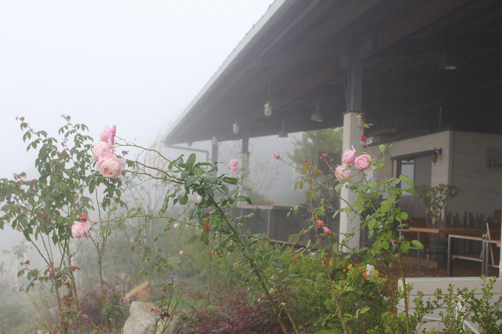 秋は毎朝霧が発生します。冷え込みのきつい日は、とくに濃い霧になります。
