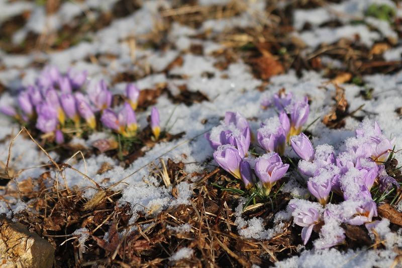 2月も後半、春が待ち遠しい植物園です。