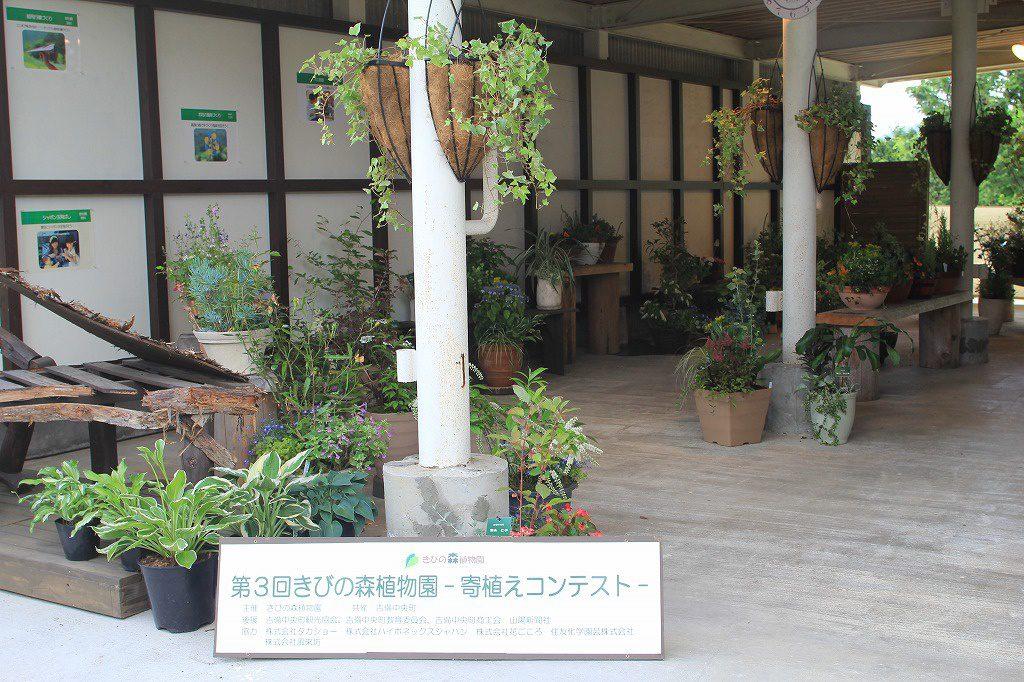 15日の木曜日には、山野草の寄植え講習会があります。