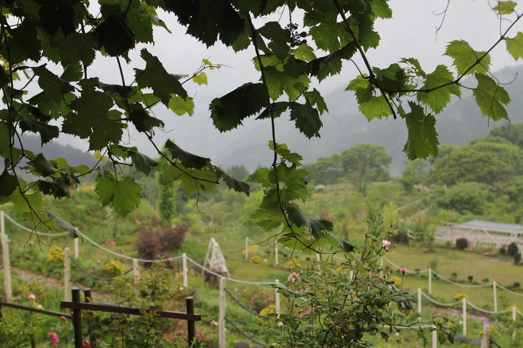 誠に勝手ながら、台風接近のため臨時休園させていただきます。木曜日から平常通り開園いたします。よろしくお願いいたします。