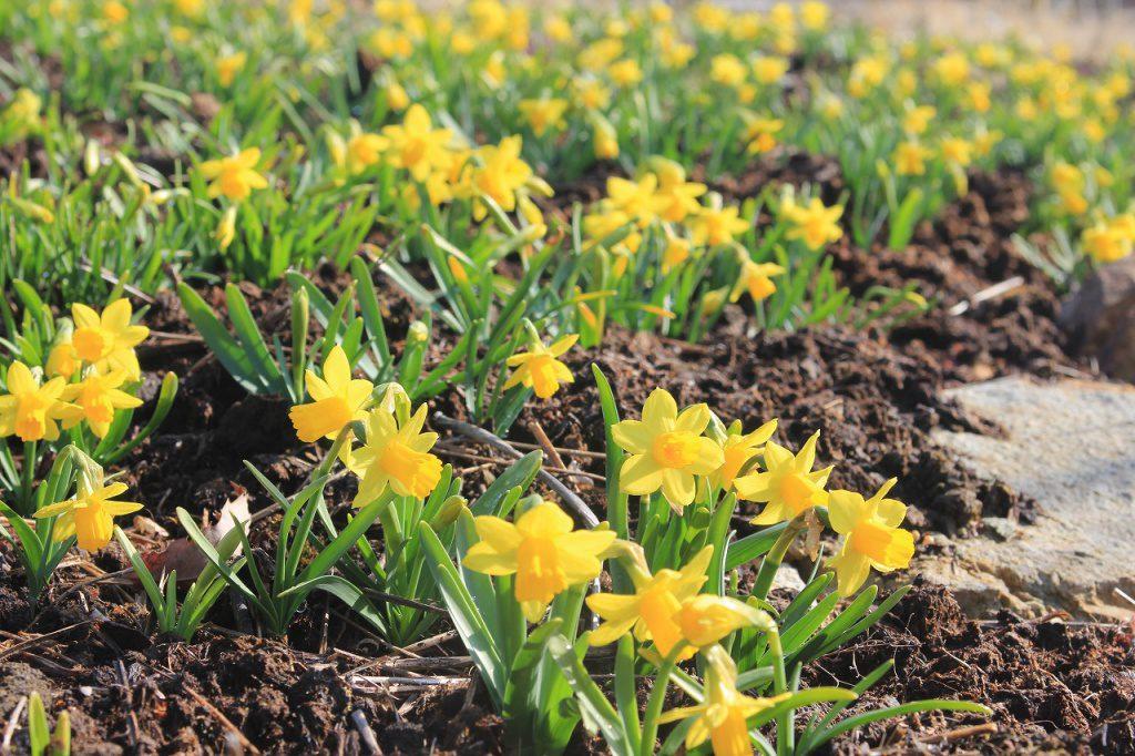 植物園にもようやく春が訪れました。
